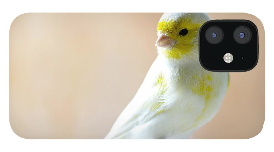 Feather IPhone 12 Case featuring the photograph Canary Bird Sitting On A Twig by Pieropoma