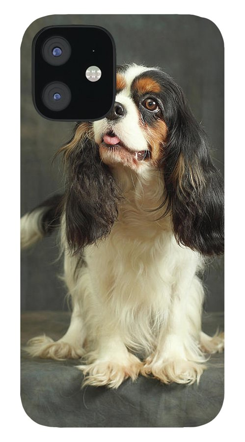 Pets IPhone 12 Case featuring the photograph Cavalier King Charles Spaniel by Sergey Ryumin