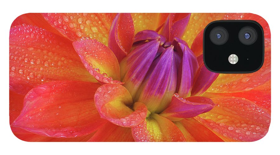 Orange Color IPhone 12 Case featuring the photograph Centre Of Brightly Coloured Dahlia by Rosemary Calvert