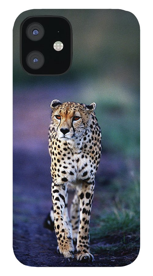Kenya IPhone 12 Case featuring the photograph Cheetah Acinonyx Jubatus by Anup Shah