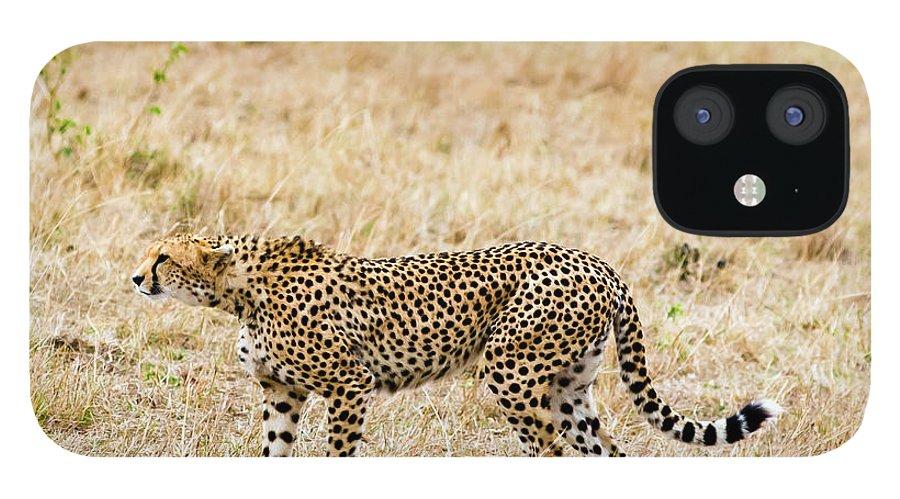 Kenya IPhone 12 Case featuring the photograph Cheetah, Acinonyx Jubatus, Masai Mara by Nico Tondini