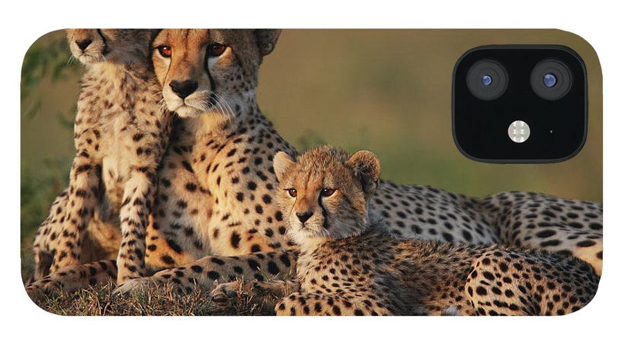 Kenya iPhone 12 Case featuring the photograph Cheetah Family by Gp232