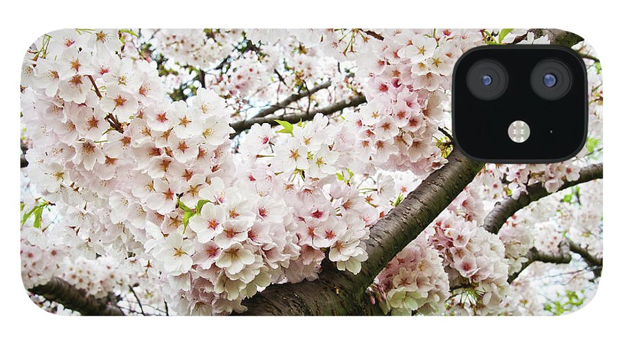 Outdoors IPhone 12 Case featuring the photograph Cherry Blossom by Sky Noir Photography By Bill Dickinson