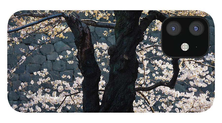 Tranquility IPhone 12 Case featuring the photograph Cherry Blossoms At The Imperial Palace by B. Tanaka