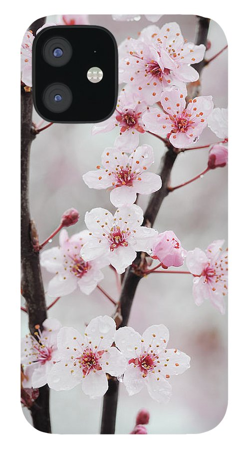 Cherry IPhone 12 Case featuring the photograph Cherry Plum Purple Plum Pink Flowers On by Martin Ruegner