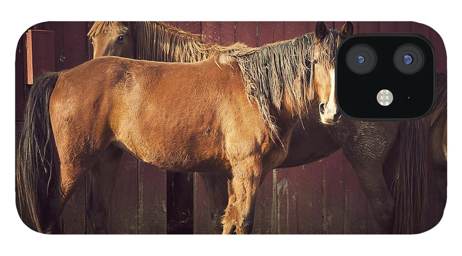 Horse IPhone 12 Case featuring the photograph Chestnut Horses by Thepalmer