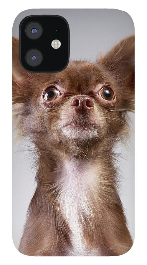 Pets IPhone 12 Case featuring the photograph Chihuahua Looking Up by Stilllifephotographer