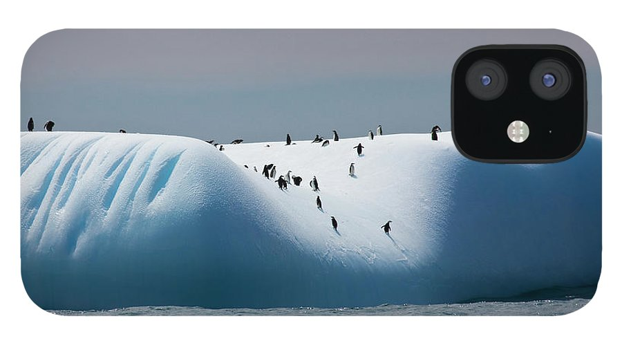 Scenics iPhone 12 Case featuring the photograph Chinstrap Penguins On Iceberg Off Of by Darrell Gulin