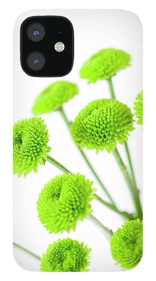 White Background IPhone 12 Case featuring the photograph Chrysanthemum Flowers by Nicholas Rigg