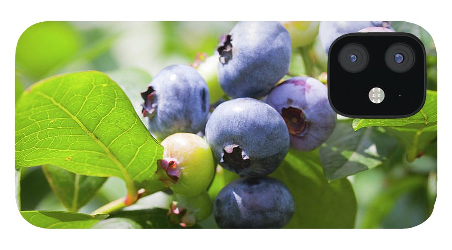Yamanashi Prefecture IPhone 12 Case featuring the photograph Close-up Of Blueberry Plant And Berries by Daisuke Morita