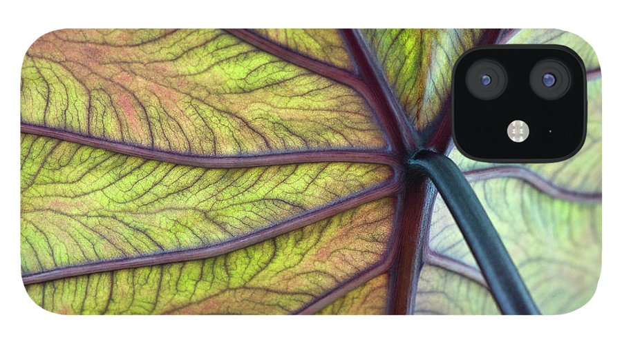 Voodoo Doll IPhone 12 Case featuring the photograph Close Up Of Colocasia Esculenta Leaf by Deb Casso