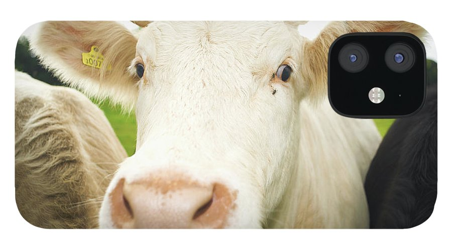 Free Range IPhone 12 Case featuring the photograph Close Up Of Cows Face by Peter Muller