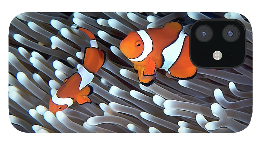 Underwater IPhone 12 Case featuring the photograph Clownfish by Copyright Melissa Fiene