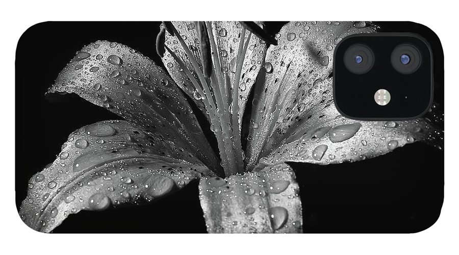 Black Background IPhone 12 Case featuring the photograph Collection by Photograph By Ryan Brady-toomey