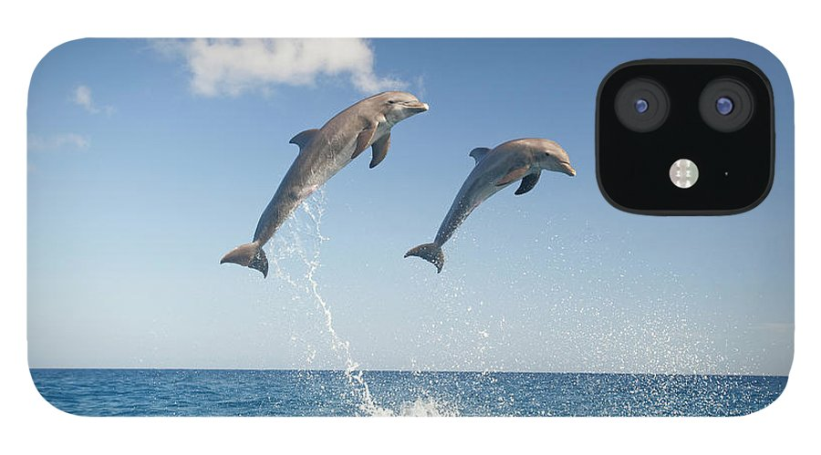 Aerodynamic IPhone 12 Case featuring the photograph Common Bottlenose Dolphins Tursiops by Mike Hill