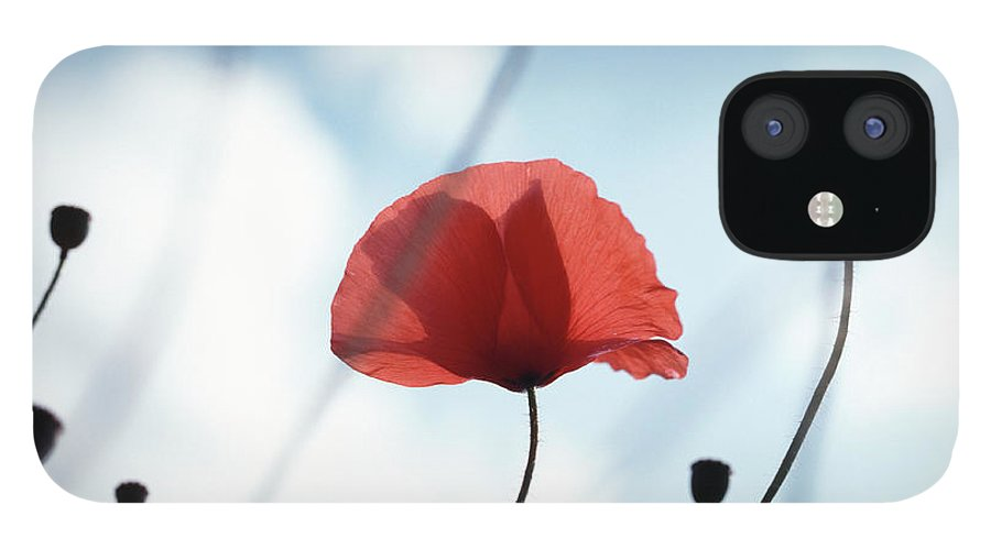 Outdoors IPhone 12 Case featuring the photograph Common Poppy Papaver Rhoeas, Close Up by Dougal Waters