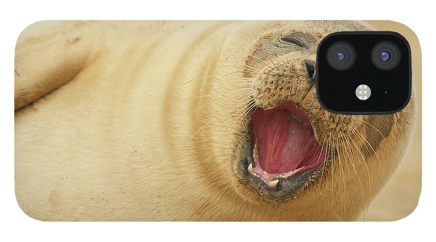 Animal Themes IPhone 12 Case featuring the photograph Common Seal by Copyright Alex Berryman