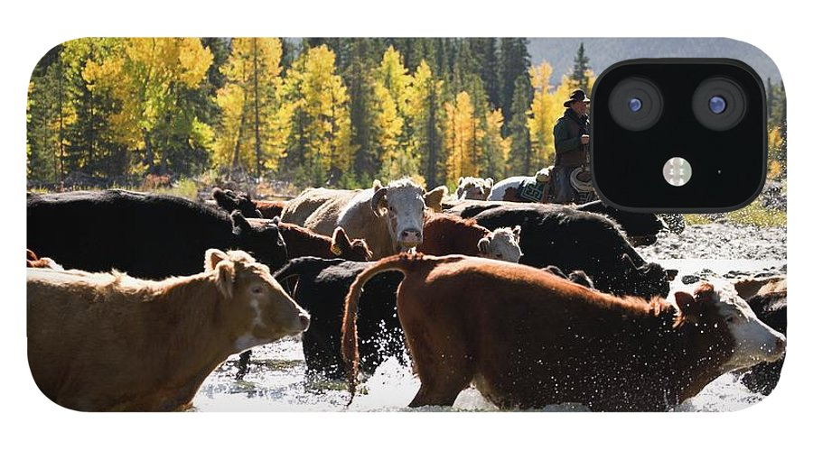 People IPhone 12 Case featuring the photograph Cowboy Herding Cattle Across River by Design Pics/carson Ganci