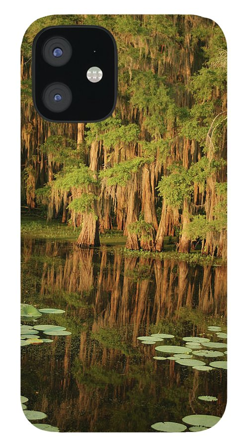 Outdoors IPhone 12 Case featuring the photograph Cypress In The Lake by Jlfcapture