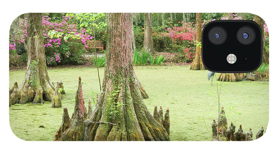 Outdoors iPhone 12 Case featuring the photograph Cypress Swamp by Tony Sweet