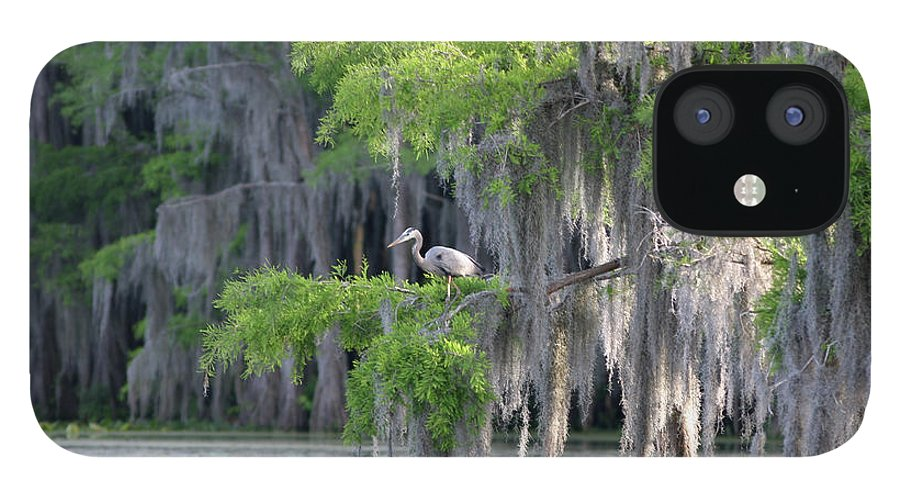 Scenics IPhone 12 Case featuring the photograph Cypress Swamp With Great Blue Heron by Jlfcapture