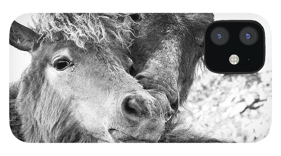 Working Animal IPhone 12 Case featuring the photograph Dartmoor Ponies by Adam Hirons Photography