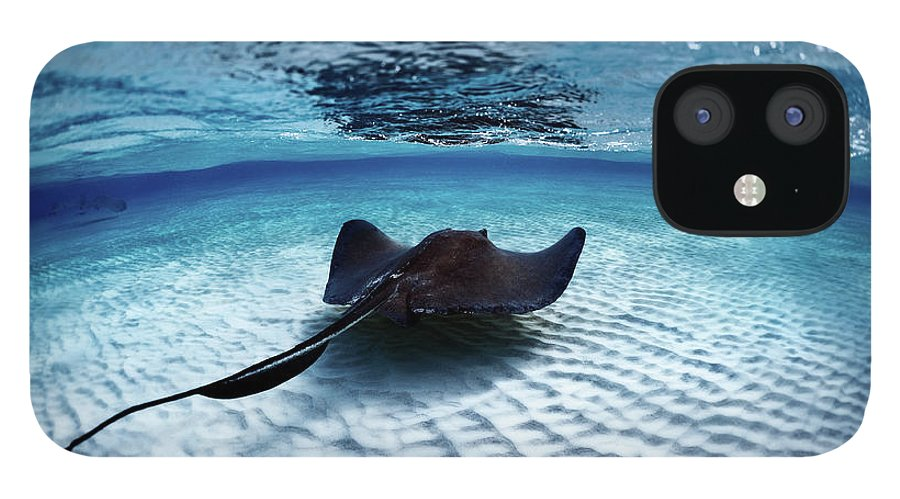 Underwater iPhone 12 Case featuring the photograph Deadly Stingray by Extreme-photographer