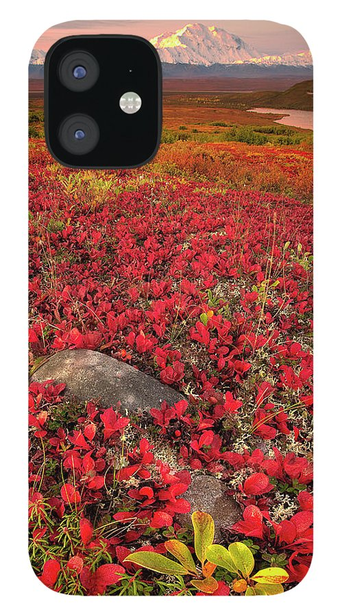 Scenics IPhone 12 Case featuring the photograph Denali National Park Fall Colors by Kevin Mcneal