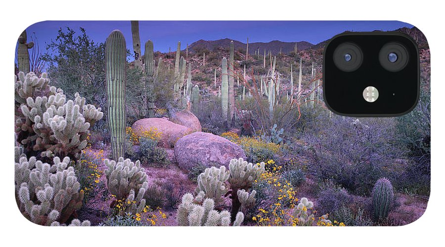 Saguaro Cactus IPhone 12 Case featuring the photograph Desert Garden by Ericfoltz