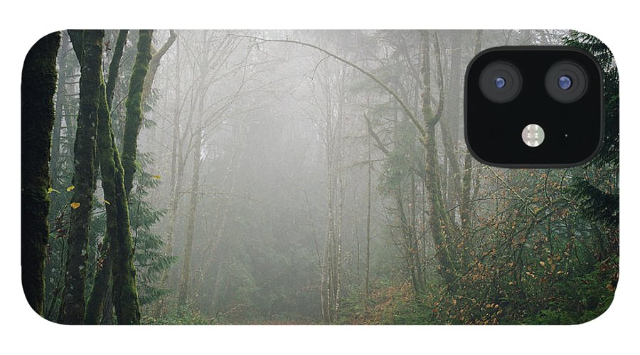 Tranquility IPhone 12 Case featuring the photograph Dirt Road Leading Through Foggy Forest by Danielle D. Hughson