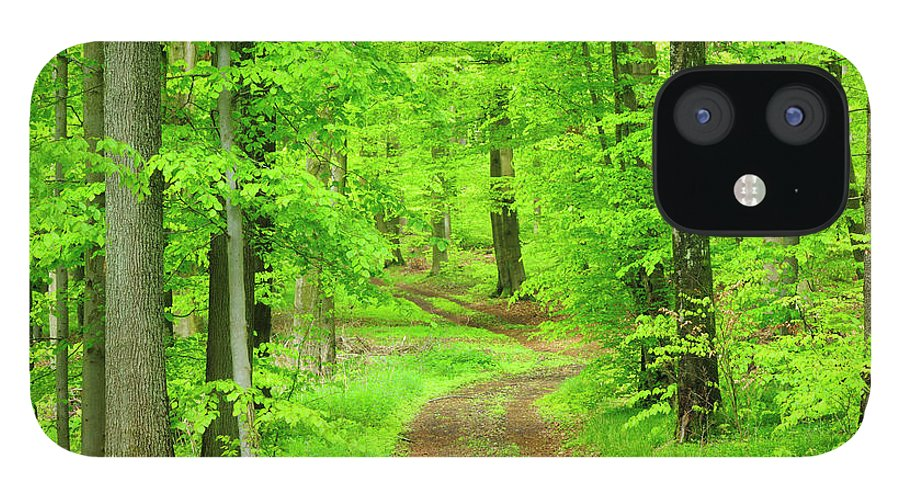 Environmental Conservation IPhone 12 Case featuring the photograph Dirt Road Through Lush Beech Tree by Avtg