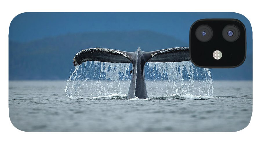 Diving Into Water IPhone 12 Case featuring the photograph Diving Humpback Whale, Alaska by Paul Souders