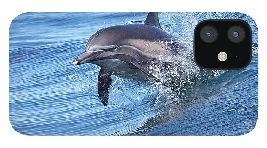Wake IPhone 12 Case featuring the photograph Dolphin Riding Wake by Greg Boreham (treklightly)