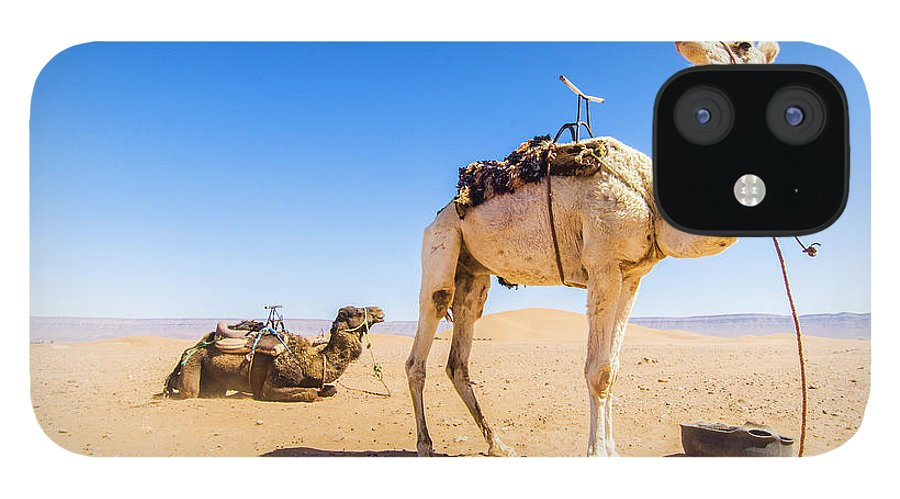 Working Animal iPhone 12 Case featuring the photograph Draa Valley, Camel At Tinfou by Maremagnum