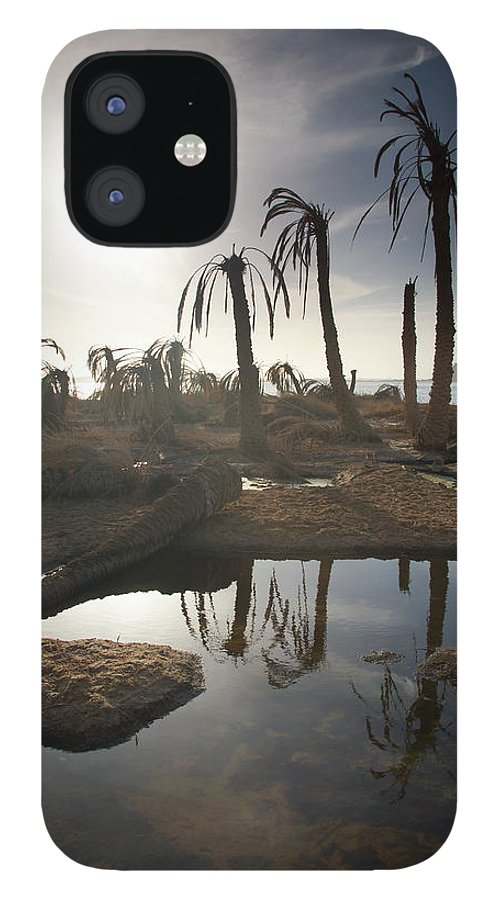 Scenics IPhone 12 Case featuring the photograph Dried Up Palm Trees And Salt Water On by Sean White / Design Pics