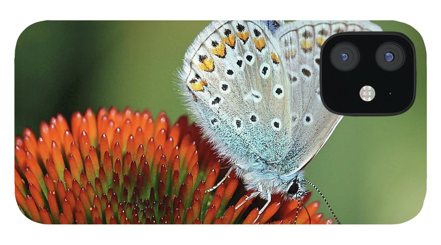 Common Blue Butterfly iPhone 12 Case featuring the photograph Echinacea And Common Blue Butterfly by Getty Images Verkauf
