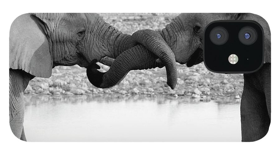 Animal Trunk IPhone 12 Case featuring the photograph Elephants Curling Trunk by Harrykolenbrander
