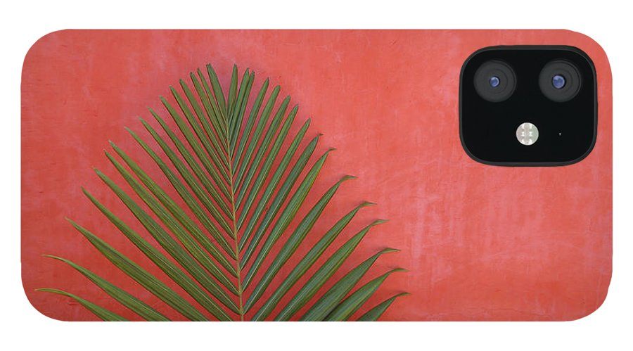 Recreational Pursuit IPhone 12 Case featuring the photograph Exotic Background by Lucgillet