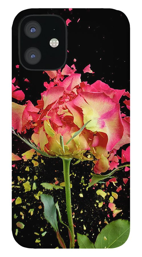 Black Background IPhone 12 Case featuring the photograph Exploding Rose by Don Farrall