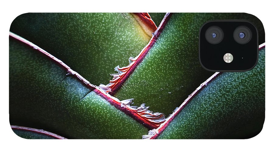 Natural Pattern iPhone 12 Case featuring the photograph Fan Leave Succulent Plant by Tontygammy + Images