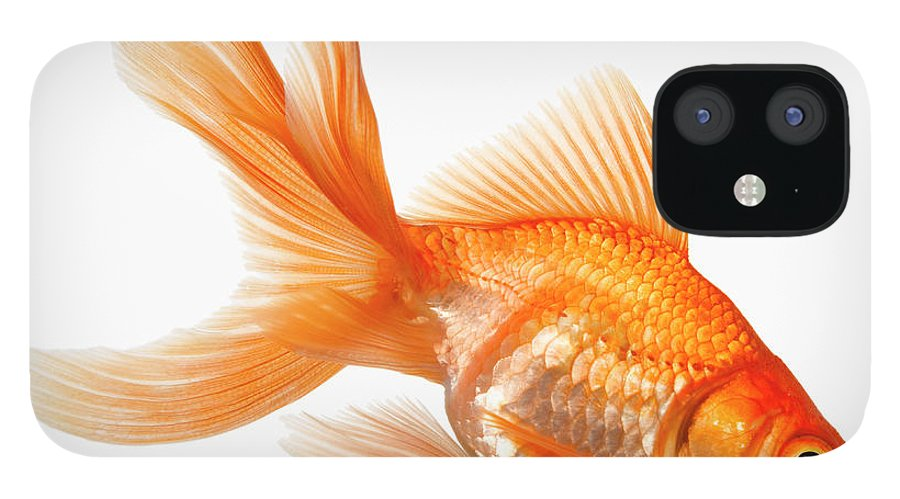 Orange Color IPhone 12 Case featuring the photograph Fancy Goldfish by Don Farrall
