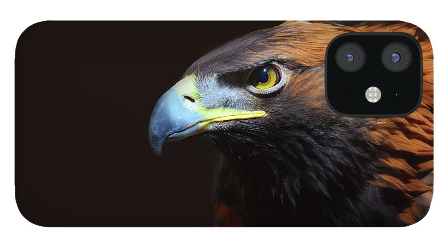 Animal Themes IPhone 12 Case featuring the photograph Female Golden Eagle by A L Christensen
