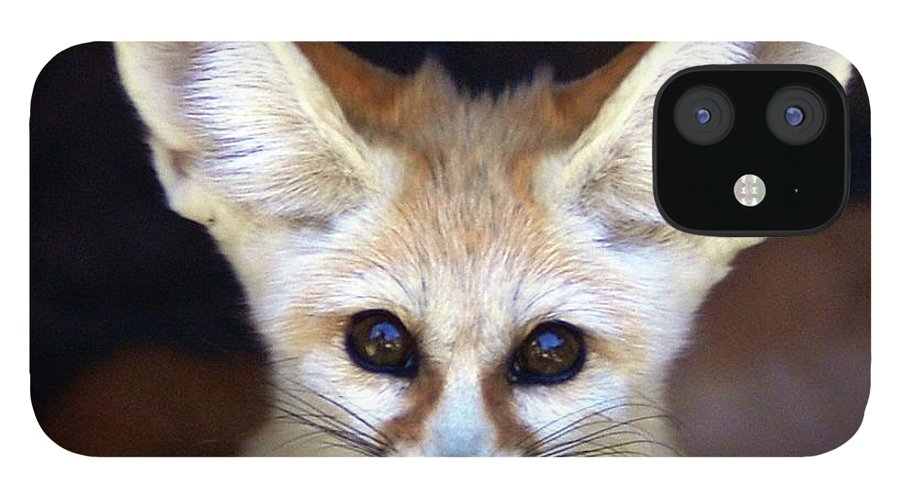 Alertness IPhone 12 Case featuring the photograph Fennec Fox by Floridapfe From S.korea Kim In Cherl