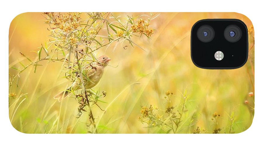Aves IPhone 12 Case featuring the photograph Field Sparrow by Heather Hubbard