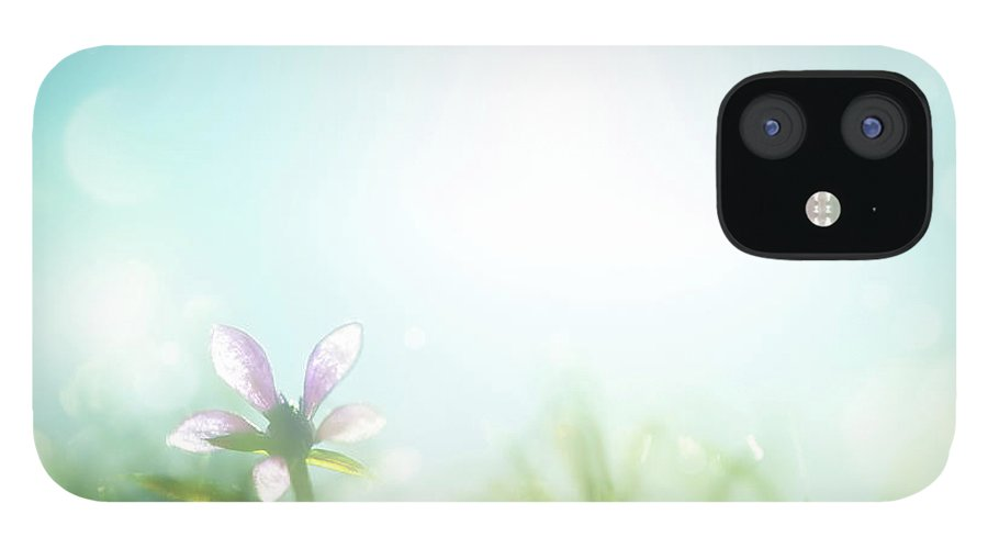 Grass IPhone 12 Case featuring the photograph Field With Daisies In The Early Morning by Jeja