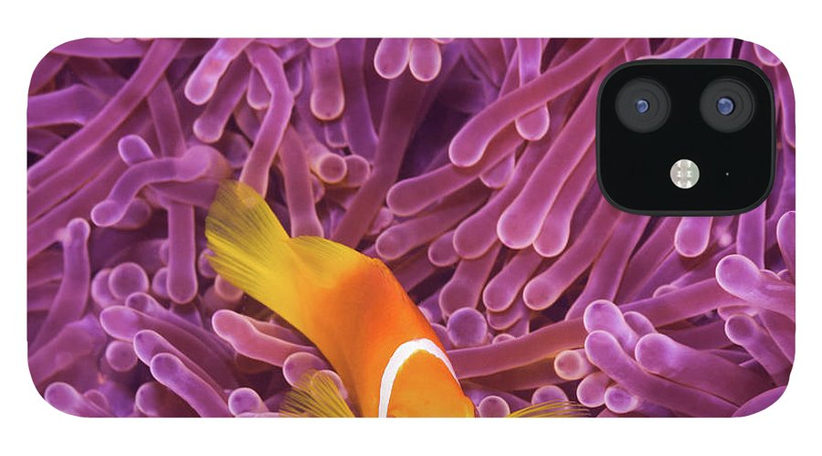Underwater IPhone 12 Case featuring the photograph Fish by Extreme-photographer