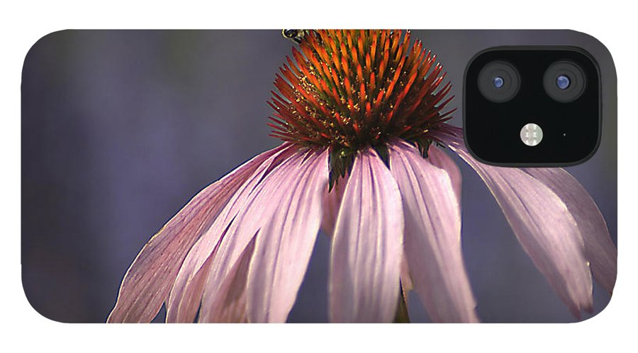 Insect IPhone 12 Case featuring the photograph Flower And Bee by Bob Van Den Berg Photography