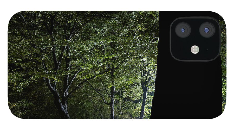 Gothic Style IPhone 12 Case featuring the photograph Forest Glow Trees Lit At Night by Peskymonkey
