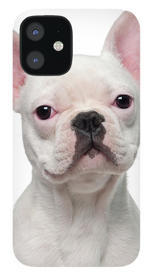 Pets iPhone 12 Case featuring the photograph French Bulldog Puppy 5 Months Old by Life On White