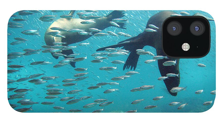 Underwater IPhone 12 Case featuring the photograph Galapagos Sea Lion by Bettina Lichtenberg